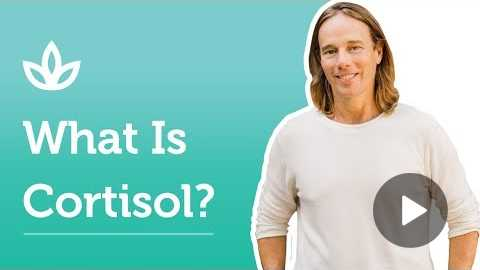 What Is Cortisol? | Dr. Group