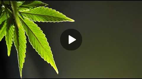 Cannabis 101 by Dr. Peter Glidden, ND