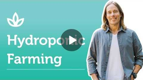 Hydroponic Farming: The Future of Farming | Dr. Group